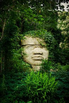 The backs of the monuments often are flat. The boulders were brought from the Sierra de los Tuxtlas mountains it is thought that the monuments represent portraits of powerful individual Olmec rulers. Each of the known examples has a distinctive headdress. The heads were variously arranged in lines or groups at major Olmec centres, but the method and logistics used to transport the stone to these sites remain unclear.