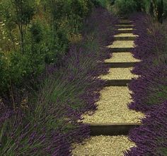 Pathways Design Ideas for Home and Garden. Lavender