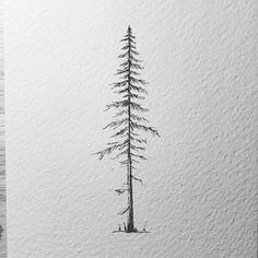 Had to redo the pine tree from the giveaway... Even with a tracking number and all things get lost -.- Have a great start into this week. Mine started so bad that by 8 am I wanted a reset... it didnt happen got worse around lunchtime but by then I resigned to this Monday... . . . #lostswissmiss #illustration #drawing #draw #sketchbook #artwork #artworks #instaart #instaartist #traditionalart #artoftheday #artsy #handdrawn #illustrate #kunst #artdiscover #artistofinstagram #inkstagram…