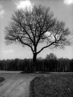 Black and white photo. It's little sad I think. Sad, My Arts, Country Roads, Black And White, Blanco Y Negro, Black N White
