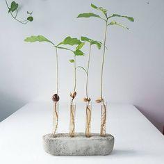 Ekollon vas DIY - Mikaela Puranen. (provrör köpta på Material i Sthlm).