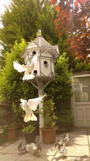 This luxurious dovecote is not only built for keeping doves but also features another 8 x incorporated nesting boxes to offer the smaller garden birds a shared residence amongst your garden. This is our largest octagonally constructed dovecotes, built to for up to 12 pairs of doves and their young. Also, features 8 x separated nesting compartments incorporated,for smaller garden birds to share residence. Magnificent finishes and a Shingled roof! 8 sided, and upon 4 levels it contains 12 x…