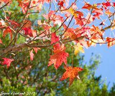 Nature Photography Buffalo River Fine Art Hawksbill