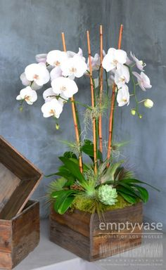 Great combination of four stems of phalaenopsis orchids complimented with succulents and air-pants then padded with green moss, all arranged...