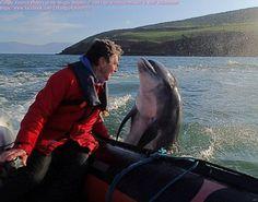 Fungi the Pet Dolphin in Dingle Bay!