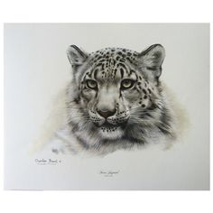 """Snow Leopard head print signed by artist Charles Frace'. 16""""h x 20""""w.                                                                                                                                                                                 More"""