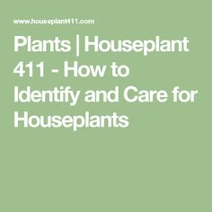 Plants | Houseplant 411 - How to Identify and Care for Houseplants