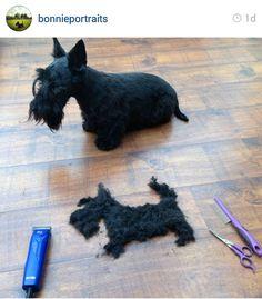 Scottie Mom: Scottish Terriers of Instagram: Week 1