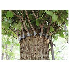 Blinded Hunting Crow's Nest Tree Stand Blind