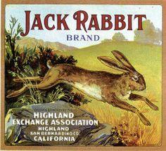 Highland Jack Rabbit Orange Citrus Crate Label Art Print