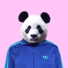 Panda by Paul Fuentes as Poster in Standard Frame Panda Illustration, Paul Fuentes, Panda Art, Art Prints Online, Animal Heads, Buy Posters, Pet Clothes, Pet Portraits, Pop Art
