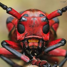 Insects & Bugs Facts : Insects and Bugs World