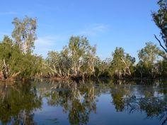 Yellow Water im Kakadu Nationl Park (Northern Territory)