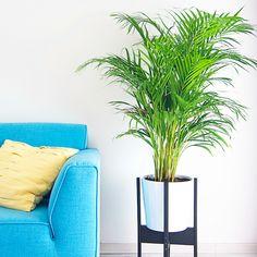Mensen die in mijn huis komen begrijpen niet dat ik al zoveel tijd besteed aan mijn tuin en planten in huis. Nu snap ik dit ook wel, als je ziet hoe ver ik van huis ben met mijn huis (pun!). Maar ik wildeer niet op wachten. Planten in huis geven gelijk zoveel sfeer en het …