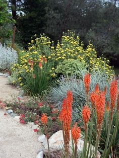 Xeriscaped sustainable driveway is surrounded with Jerusalem sage and red-hot poker, which add pops of red and yellow color