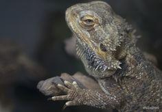 Reptil en la sala de espera de un Veterinario