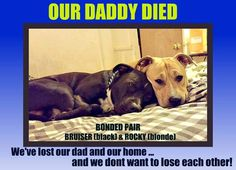 ** PLEASE HELP!!** VOORHEES, NJ**2/11 UPDATE: STILL IN NEED of a FOREVER HOME! PLEASE, OUR DADDY DIED and WE NEED a NEW FAMILY and a NEW HOME! PLEASE ADOPT US because ... WE NEED YOU. We are BRUISER and ROCKY! We are SUPER SWEET & KID FRIENDLY!CONTACT INFO: VOORHEES ANIMAL ORPHANAGE  PHONE: (856) 627-9111 EMAIL: info@vaonj.org web page  https://www.facebook.com/photo.php?fbid=10208283606308723&set=a.2999296182345.2154328.1260507014&type=3&theater