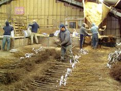 Our outstanding team using their expertise to organize the bare root trees