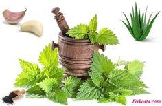 Egzama bitkisel tedavi Aloe, Planter Pots, Herbs, Vegetables, Health, Aspirin, Health And Beauty, Gout, Sore Muscles