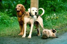 Homeward Bound!! I loved these movies! Sassy, Shadow, and Chance! How do I remember their names stilll?  I still want a cat JUST like Sassy!