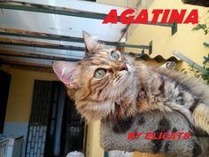 #Ascite cane gatto Cause Sintomi