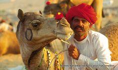 #Dromadaire, #Inde / #India