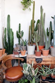 Look at all these incredible cactus plants! All these beautiful cactus are loaded onto a wooden table with a few little potted succulents.