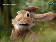 Land Rover - From 0-100 km/h in 4.5 seconds. The fastest Land Rover ever. #Advert & #Animals