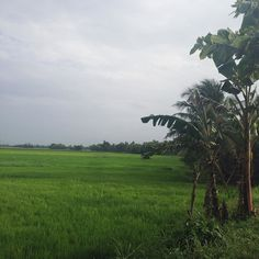 Lush green and the smell of rain  #kerala #godsowncountry #incredibleindia