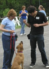 ITC teaching & training  by Dogs of Course