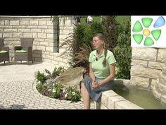 Garten-Video 🌴 Mediterraner Traumgarten 🌴 Palme, Toskana-Zypresse 🌴 Brunnen…