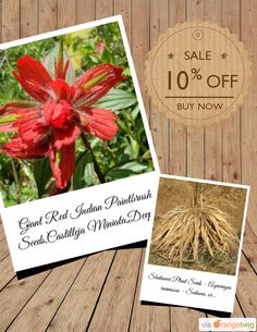 10% OFF on select products. Hurry, sale ending soon! Check out our discounted products now: https://orangetwig.com/shops/AAAibxW/campaigns/AABufU4?cb=2015012&sn=CaribbeanGarden&ch=pin&crid=AABufAE
