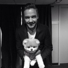 Boo's famous friends included singer Liam Payne Boo the Pomeranian dog, from San Francisco, passed away Friday due to heart problems he started experiencing shortly after his fellow canine friend Buddy died in Niall Horan, Zayn Malik, Liam James, Liam Payne, Louis Tomlinson, Grupo One Direction, Boo And Buddy, World Cutest Dog, San Francisco
