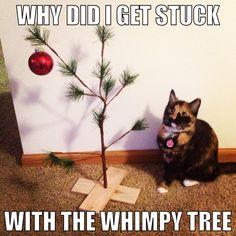 Christmas cat - hard to climb that tree!  funholidaycats.com