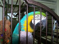 Bosley is an adoptable Macaw Parrot in Pineville, NC. look at this birds pics to see WHY you need to do your homework before you buy ANY bird!