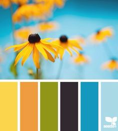 teal, yellow, orange