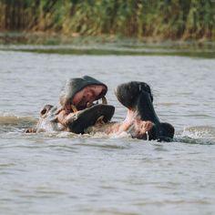 Lucia, Zuid-Afrika, safari - Map of Joy Hippopotamus, South Africa, Safari, Joy, Travel, Animals, Rice, Viajes, Animaux