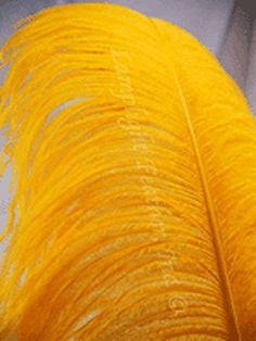 """Ostrich Wing Plume, 25-28"""", X-WIDE, Many Color Options, HAND SELECTED, per each, by Lamplight Feather Inc. (Gold) Lamplight Feather, Inc. http://www.amazon.com/dp/B00RY5JXFC/ref=cm_sw_r_pi_dp_evbNwb1Y0ZSYB"""