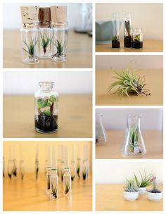 my favorite things combined.mini AND succulents AND chemistry glassware.Several of my favorite things combined.mini AND succulents AND chemistry glassware. Mini Terrarium, Garden Terrarium, Glass Terrarium, Terrarium Ideas, Terrarium Necklace, Succulent Planters, Hanging Planters, Terrariums, Succulents Garden