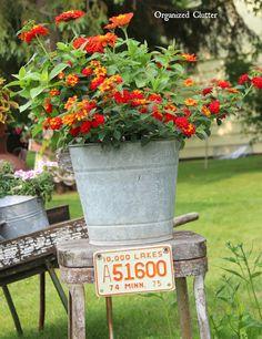 10 Goofproof Outdoor Plants Gardening Plants Outdoor