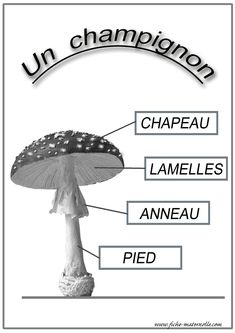 Petite Section, Learn French, Lily, Education, Nature, Trivia, Autumn, Outdoor, Class Activities