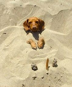 Man! This dog must love being on the beach! Lol