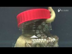 I'm Outta Here: Octopus In Jar Opens It From The Inside
