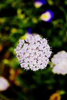 flower in the backyard