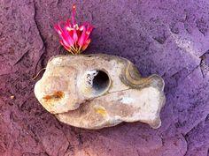 Holey Stone Holy Stone Fairy Stone Hag Stone by FaesBlueMoon, $10.00 Whale Magick, Communication, Totem or familiar. Hag Stones, Magick, Holi, Communication, Fairy, Unique Jewelry, Handmade Gifts, Vintage, Etsy
