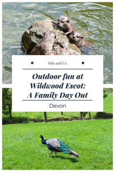 Wildwood Escot: Family Friendly Day Out During our stay at Andrewshayes Holiday Park in East Devon, we were invited along to explore Wildwood Escot for…