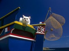 Cat in luzzu fishing boat