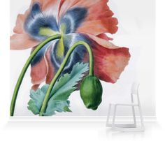 Murals of Papaver Somniferum by Royal Horticultural Society (3000mm x 2400mm) | Shop | Surface View