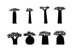 silhouette baobab