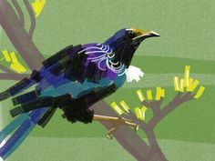 Continuing on NZ bird theme, this time the tui. #30daysofcreativity